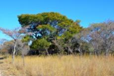 Farm for sale in Vaalwater 994785 : photo#27