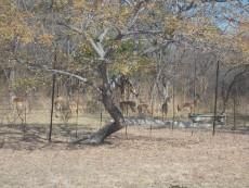 8 Bedroom Farm for sale in Vaalwater 997815 : photo#25