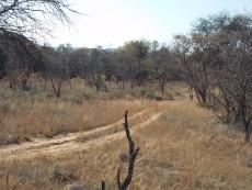 8 Bedroom Farm for sale in Vaalwater 997815 : photo#30
